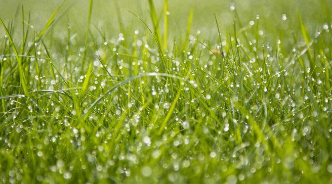 Очищение — босиком по росе